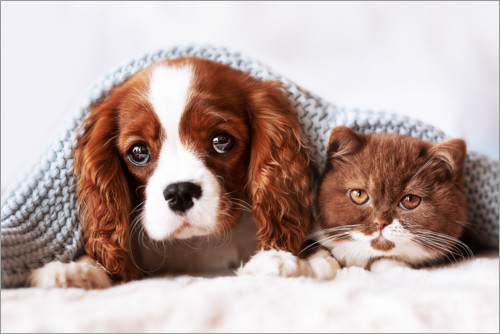 Poster Amis, chiot et chaton