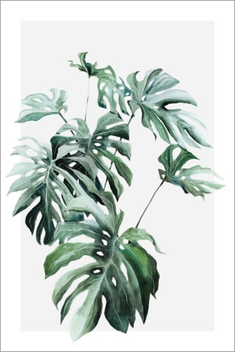 Poster Plante Monstera