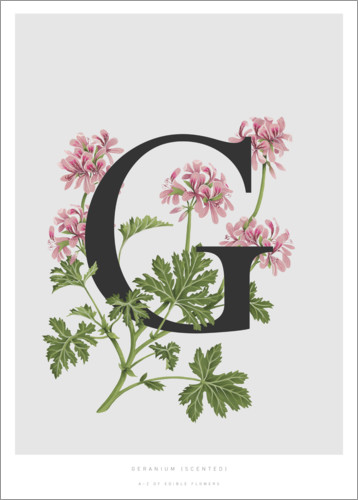 Poster G is for Geranium