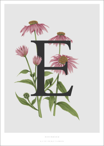 Poster E is for Echinacea