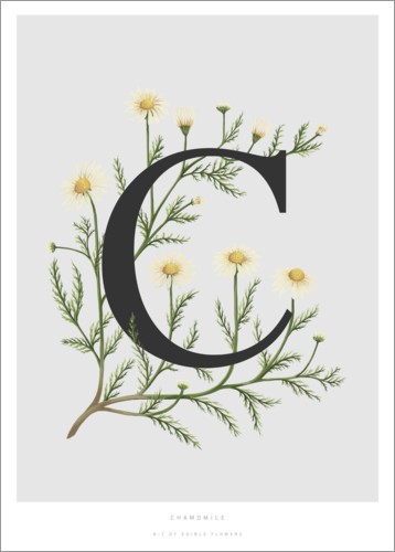 Poster C is for Chamomile