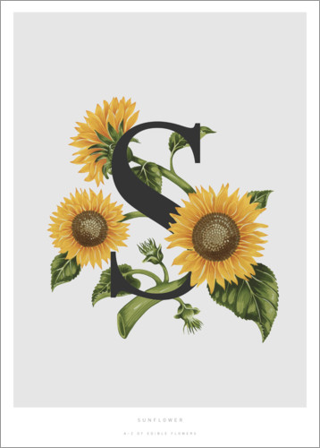 Poster S is for Sunflower