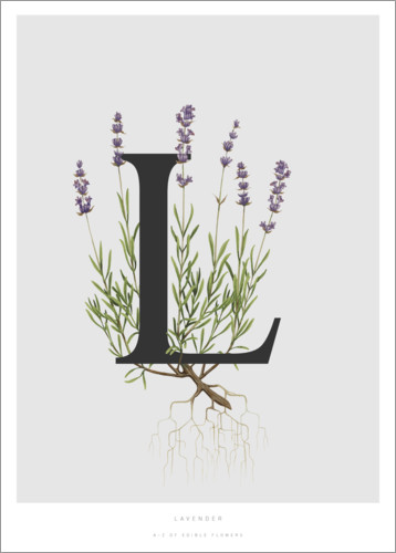 Poster L is for Lavender