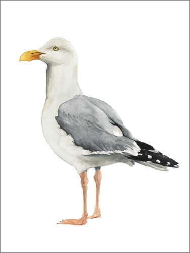 Poster Mouette