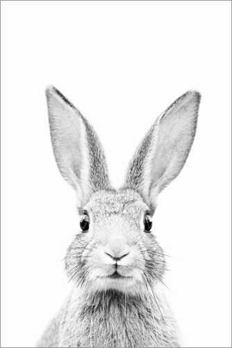 Poster Lapin curieux