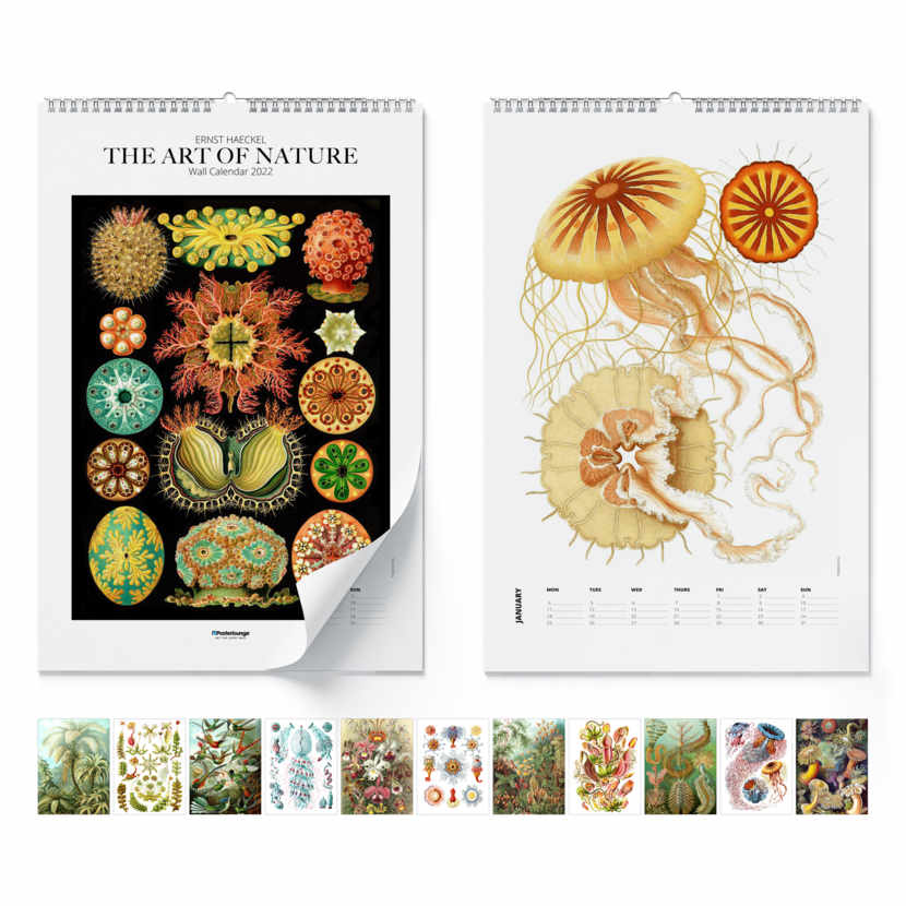 Calendrier mural Ernst Haeckel, The Art Of Nature 2021