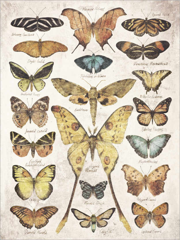Poster Papillons