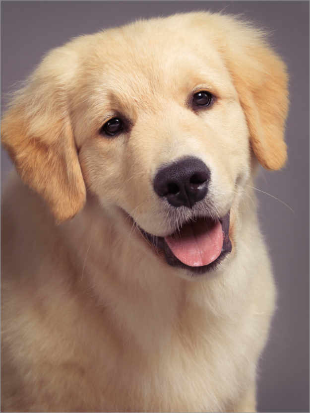 Retriever write an essay on the topic you are what your parents eat