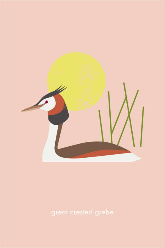 Poster Great crested grebe