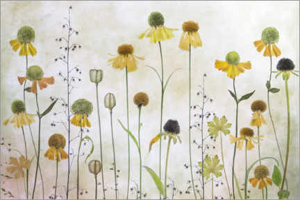Poster  Hélénies - Mandy Disher