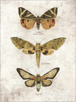 Poster Papillons VI