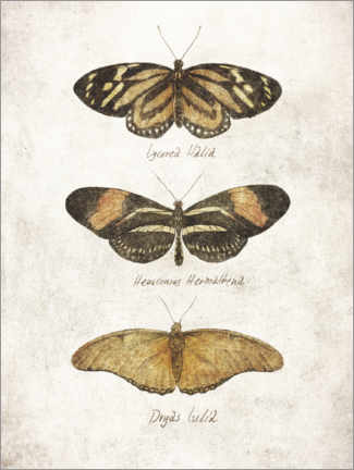 Poster Papillons III