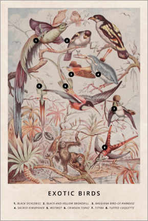 Poster  Oiseaux exotiques (anglais) - Wunderkammer Collection