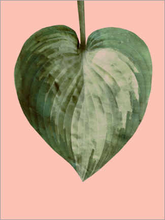 Poster Philodendron sur fond rose