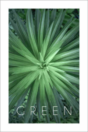 Poster Green 1