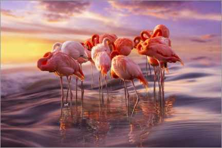 Tableau en PVC  Sieste des flamants roses - Adrian Borda
