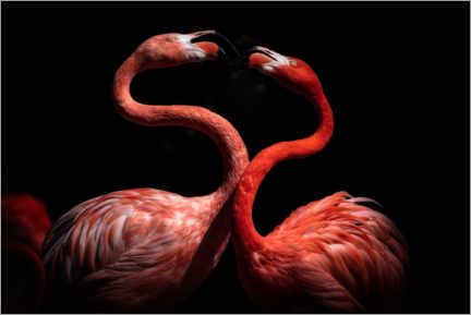 Poster Flamants roses