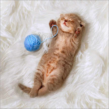 Poster Kitten with a ball all of wool