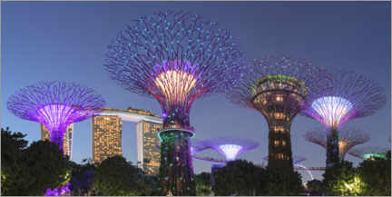 Poster  Supertrees by night, Singapour - Markus Lange