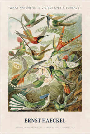 Poster  Ernst Haeckel - What nature is - Museum Art Edition