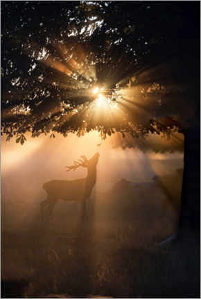 Tableau sur toile  Young deer in the evening light - Max Ellis