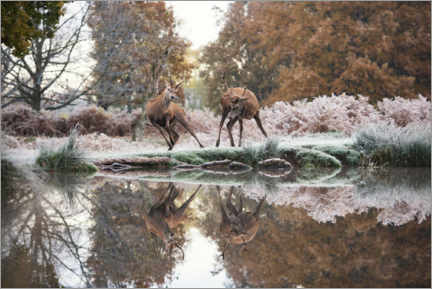 Poster Reflections of the wild