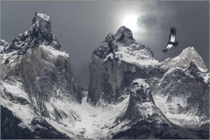 Poster  Andean condor and mountains in Torres del Paine National Park - Jaynes Gallery