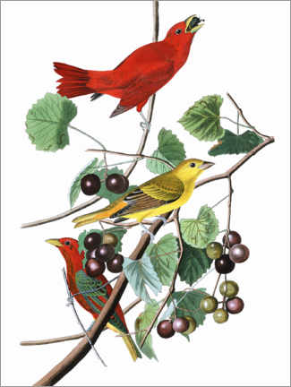 Tableau en bois  Piranga vermillon - John James Audubon
