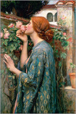 Tableau en plexi-alu  L'âme de la Rose - John William Waterhouse