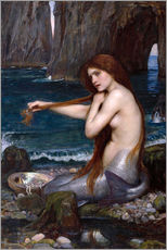 Tableau en plexi-alu  La sirène - John William Waterhouse