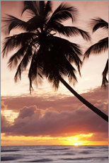 Tableau en plexi-alu  Tropical sunset, Bridgetown, Barbados, West Indies, Caribbean, Central America - Angelo Cavalli