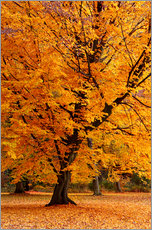 Tableau en plexi-alu  Autumn tree in the park - Atteloi