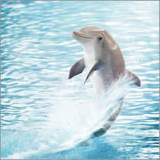 Sticker mural  dolphin - Photoplace Creative