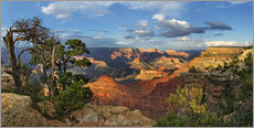 Sticker mural  Grand Canyon avec un pin noueux - Michael Rucker