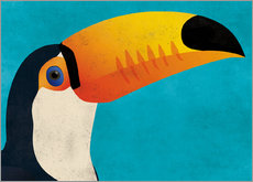 Sticker mural  Toucan - coico