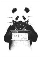 Sticker mural  Bad panda - Balazs Solti