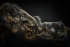 Tableau en plexi-alu  Tenderness Asian Elephants - Manuela Kulpa