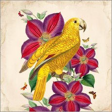 Sticker mural  Oh My Parrot V - Mandy Reinmuth