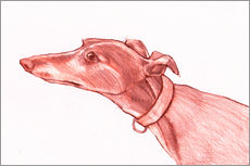 Tableau en plexi-alu  Greyhound pencil drawing white and red colour pencil sketch - Jim Griffiths