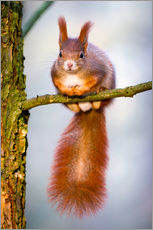 Squirrel on small branch