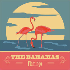 Tableau en plexi-alu  The Bahamas - Flamants roses