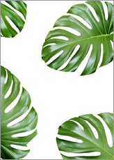 Sticker mural  Feuilles de monstera - Finlay and Noa