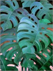 Sticker mural  Monstera Love in Teal and Emerald Green - Micklyn Le Feuvre