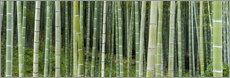 Tableau en plexi-alu  Green bamboo forest in Kyoto, Japan - Jan Christopher Becke