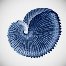 Tableau en plexi-alu  Seashell - Mandy Reinmuth