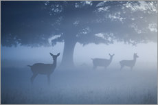 Tableau en plexi-alu  Deer in mist - Alex Saberi