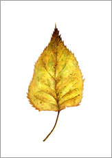 Tableau en plexi-alu  Birch Leaf - RNDMS