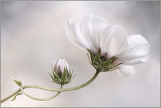 Sticker mural  Charmant cosmos - Mandy Disher