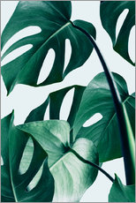 Tableau en plexi-alu  Monstera - Uma 83 Oranges