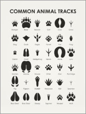 Poster Common Animal Tracks (anglais)